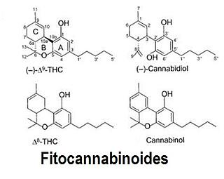 01 FITOcannabinoides-naturales.jpg