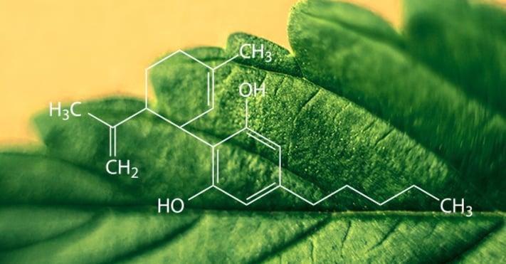 01 cannabinoides.jpg