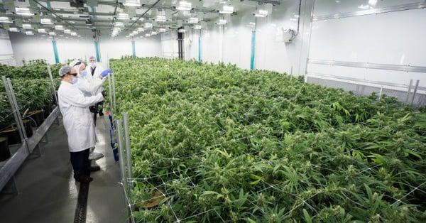 cannabis-canada