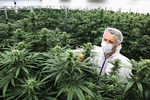 cannabis-legal